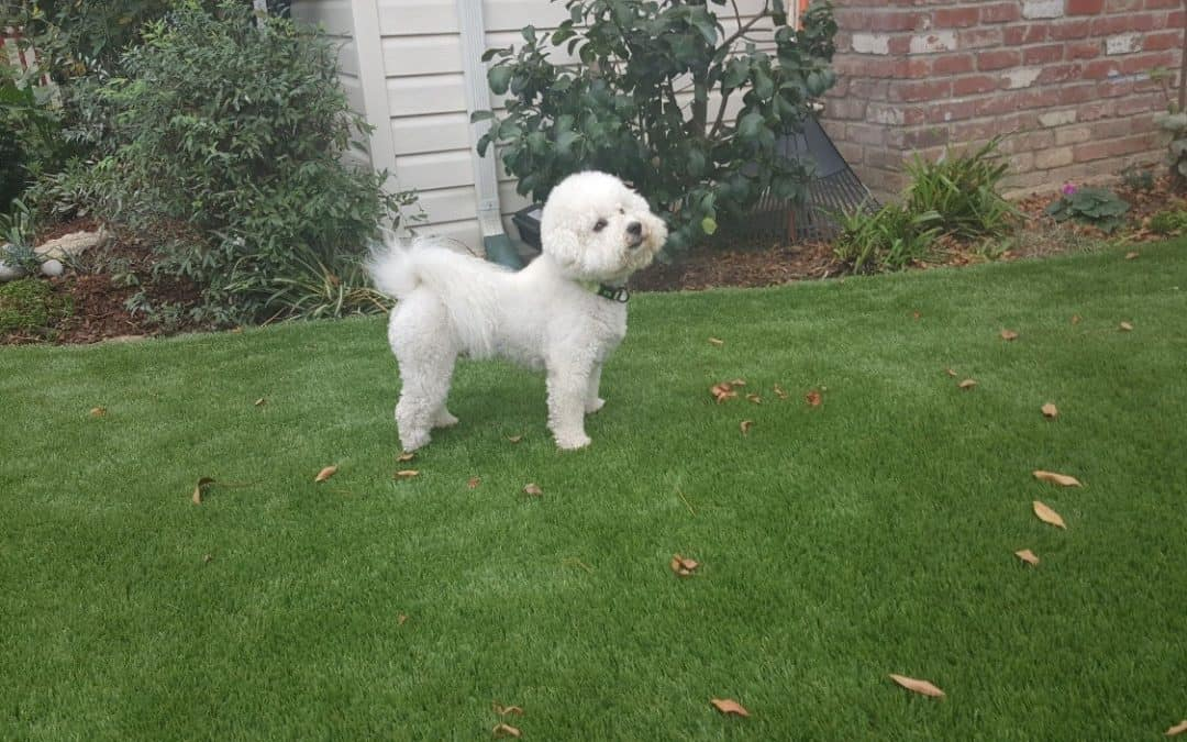 Pet Owners Have Artificial Turf Installed So Pets Can Roam Freely