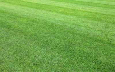 Synthetic Grass in Stockton: The Hassle-Free Way to Achieving the Perfect Lawn