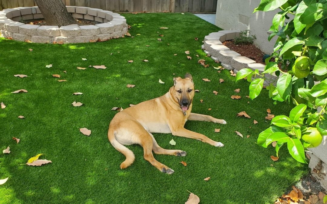 4 Fresh Ideas for the Best Artificial Grass for Dogs in Stockton